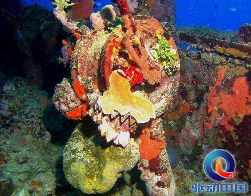 壁纸 海底 海底世界 海洋馆 水族馆 500_391