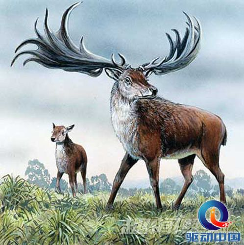活的灭绝动物(4)