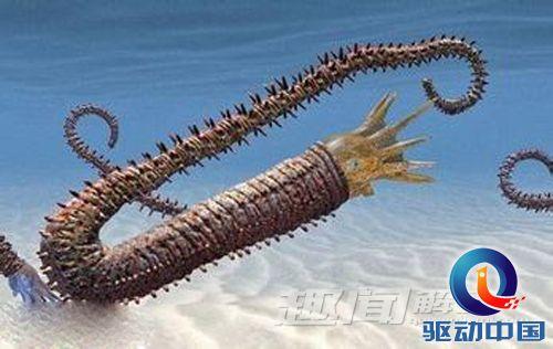 海底鱿鱼简笔画