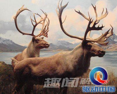 十大远古灭绝动物离奇复活!