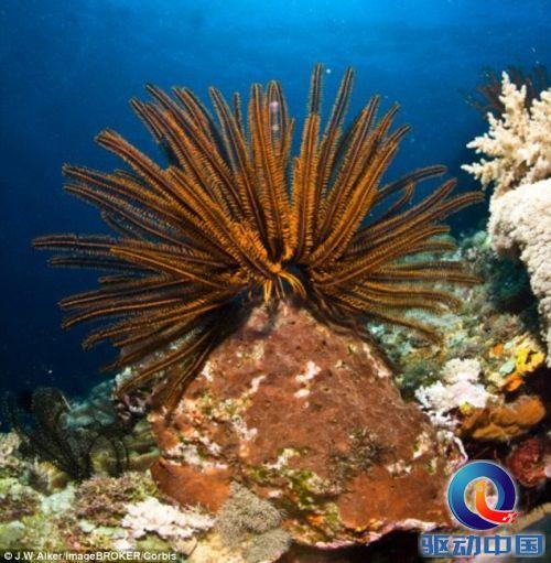 壁纸 海底 海底世界 海洋馆 水族馆 桌面 500_511