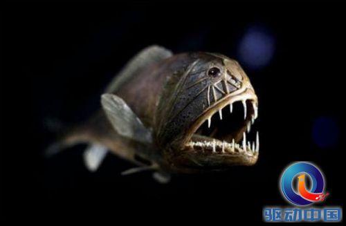 没见过的五种个深海怪鱼