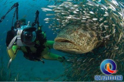 最大的鱼 又见深海怪鱼 多图