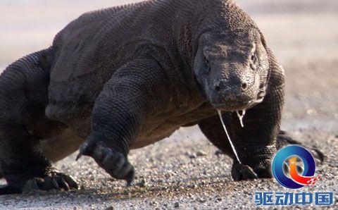 在这样一种情况下,爬行动物迅速繁殖且体型不断变大,恐龙开始统治地球
