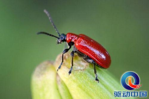 昆虫和陆生节肢动物的数量分别为