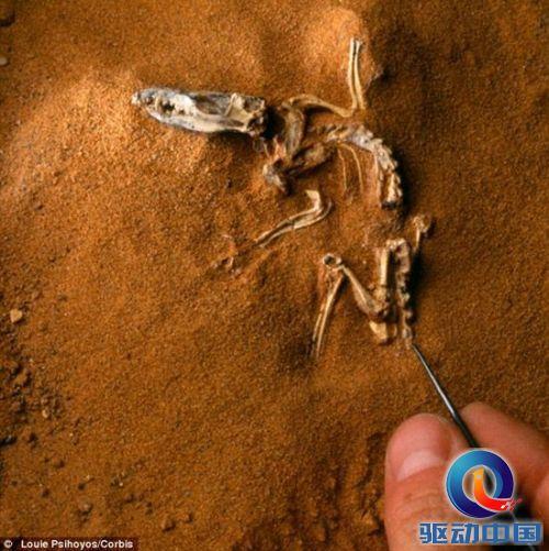 哺乳动物在恐龙时代经历 爆发式 演化