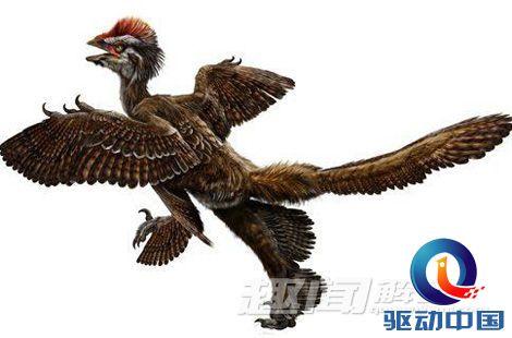 史前生物:盘点十大有羽毛的恐龙物种