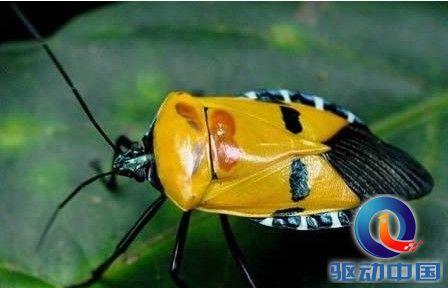 动物世界盘点十大人脸动物 不明昆虫似老头