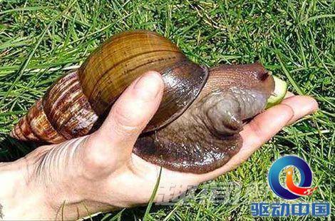 世界上最可爱的蜗牛