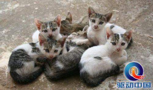 转基因疫苗让流浪猫狗一针绝育:免受开刀之苦