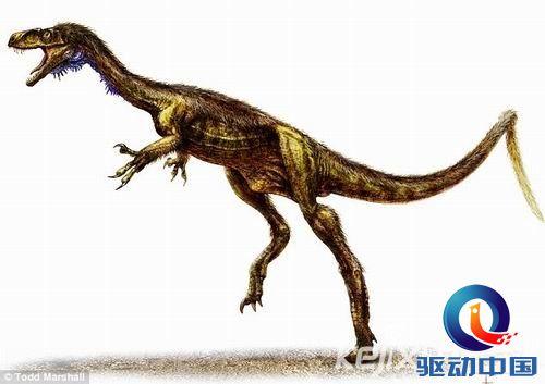 动物祖先演变图片