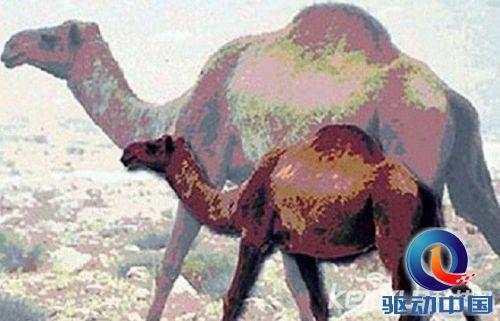 6,史前袋鼠:袋鼠是非常可爱的动物,尤其是幼鼠是在育儿袋中成长,红色
