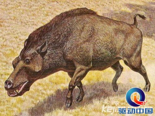 动物界十大巨型祖先 阿根廷巨鹰为最大鸟类