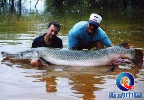 世界最大鱼视频_世界上最大的鱼是什么鱼_科学探索_资讯中心_驱动中国