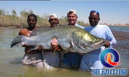 世界上最大的鱼是什么鱼