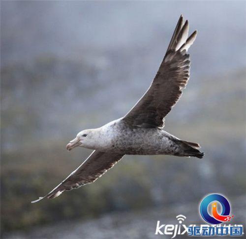 全球最神秘动物盘点 叫声惊悚的百慕大海燕