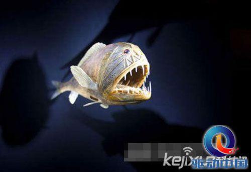 盘点:全球7大最丑陋鱼类 亚洲羊头鱼长像史莱克
