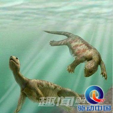盘点动物进化祖先 哪种动物最奇葩?