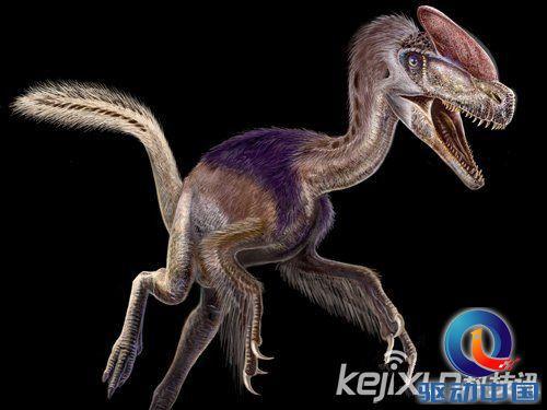 所有动物最早的祖先的图片