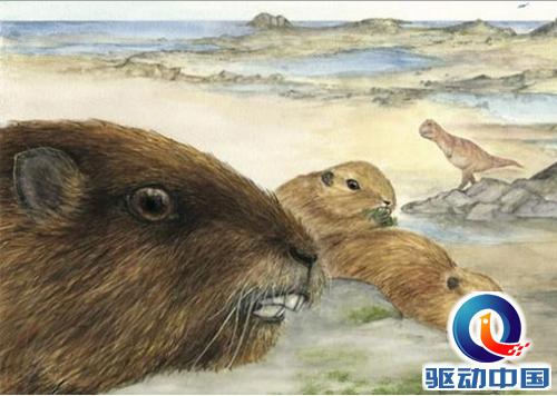 马达加斯加发现恐龙时代哺乳动物 巨人 的化石
