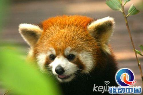最萌的动物_盘点 2011最萌动物