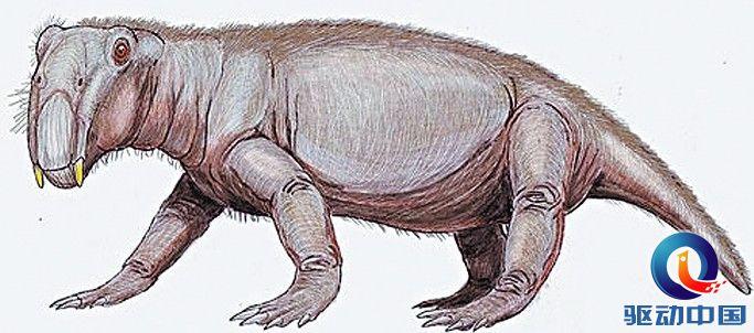 盘点史前神秘的远古生物:堪比恐龙更奇异