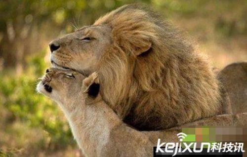 可爱的动物们在亲近大自然,享受与人类的和谐世界.