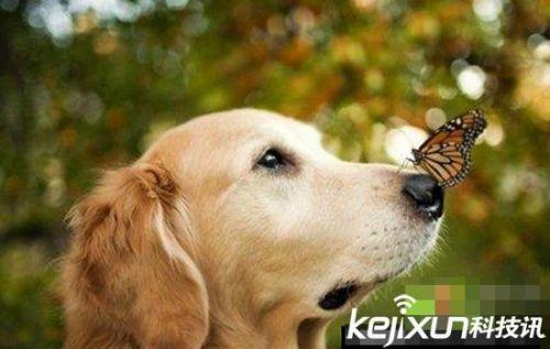 动物世界八张最震撼心人心 摄影作品欣赏