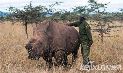 十大濒临灭绝动物:世上最后一只白犀牛受保护
