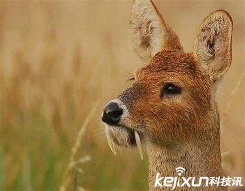 中国古代珍奇动物图片