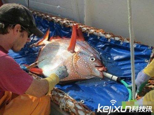 鱼一般是冷血动物,极少种类的鱼(比如大白鲨)是变温