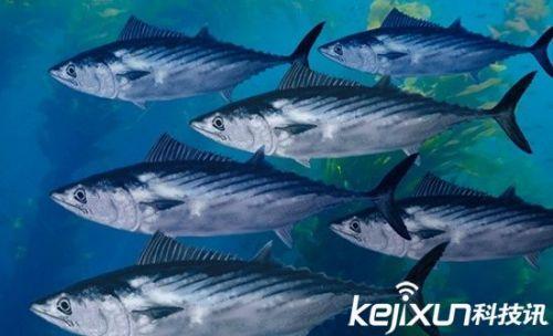大海中的生死时速 盘点十种最快海洋动物_驱动中国