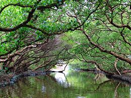 台湾的亚马逊:台江国家公园
