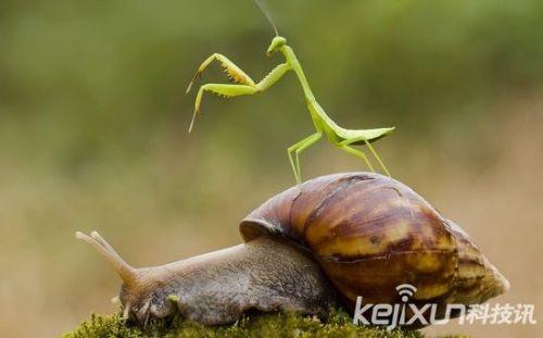 a动物搭便车的十大动物一次说走就走的v动物蟒蛇的大便照片图片