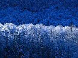 喀尔巴阡山脉原始山毛榉林