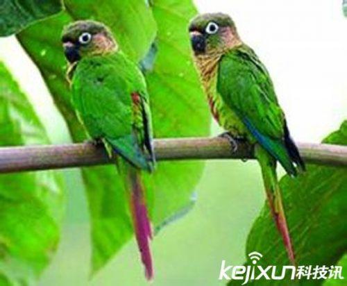 自然界十大最神奇动物 鹦鹉有6岁孩子智力