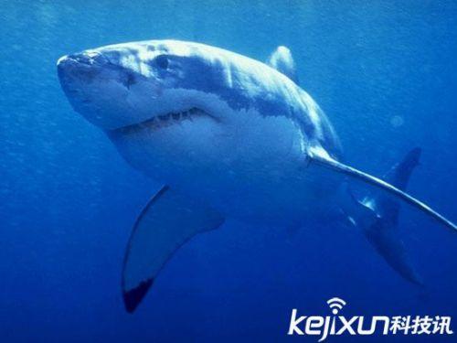 大白鲨可活70岁 全球长寿动物盘点