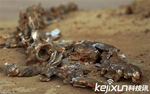 谷拥有迷人的古代海洋生物化石,5000万年前此处为古地中海,占据了非洲