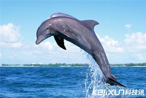 壁纸 动物 海洋动物 桌面 500_335