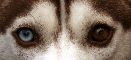 十大最奇特的动物眼睛,你知道哪些?