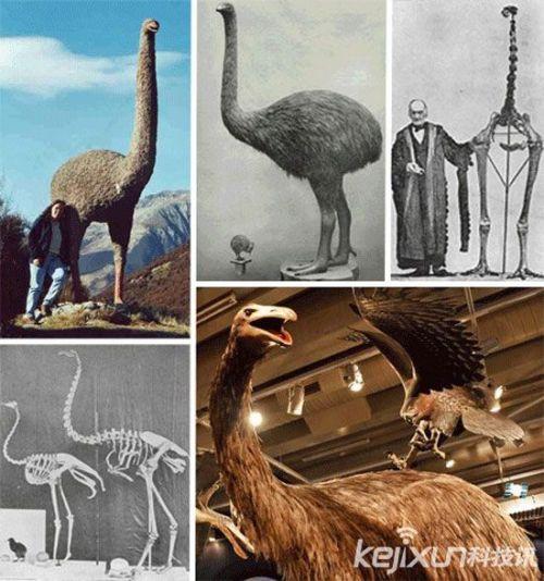 动物界十大灭绝史前动物:泰坦巨蟒超1吨重