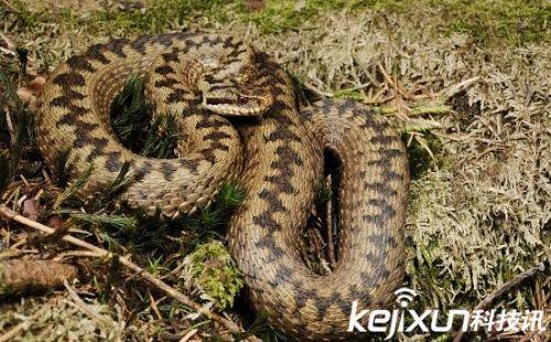 世界上毒性最强的八大毒蛇