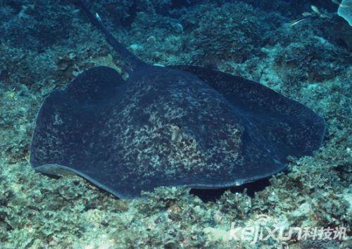 壁纸 海底 海底世界 海洋馆 水族馆 桌面 500_354