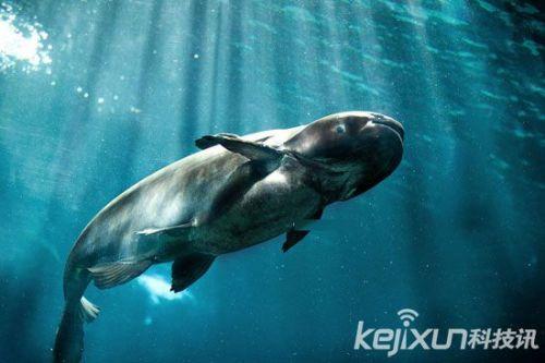 动物世界巨型动物盘点:湄公河巨鲶如远古巨兽