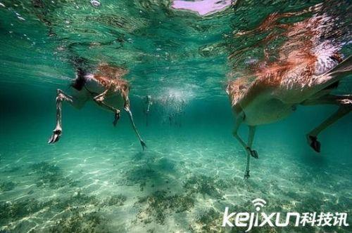 迪拜摄影师拍摄水下生物:独特视角呈现精彩海底世界