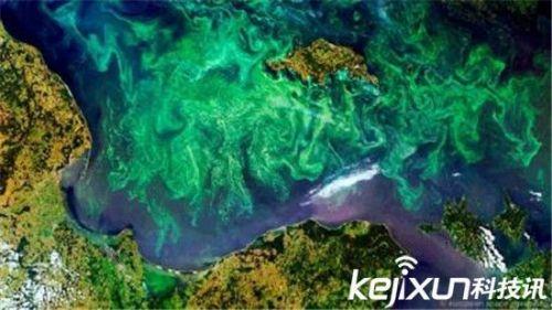 泥盆纪生物大灭绝 海洋动物竟是死于窒息