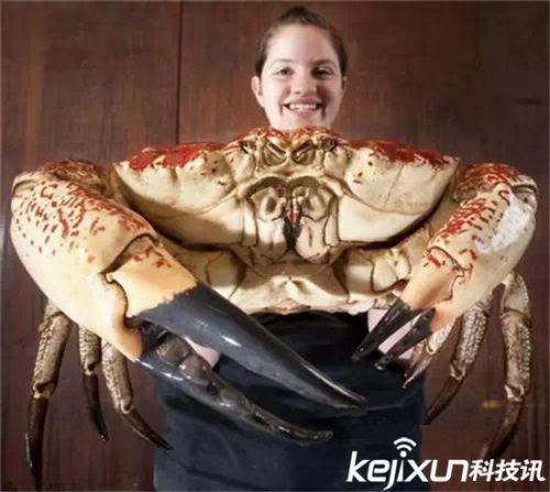 [塔斯马尼亚帝王蟹]震惊!奇葩动物16种 马尼亚帝王蟹堪称蟹皇