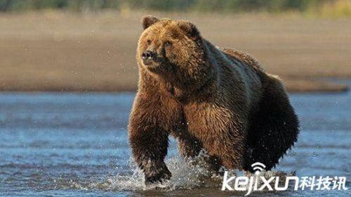 世界最恐怖十大动物:一个比一个恐怖!