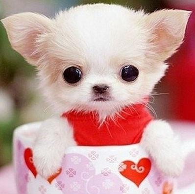 可爱的杯子狗图片