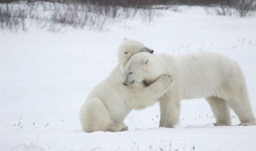 拥抱动物高清图片